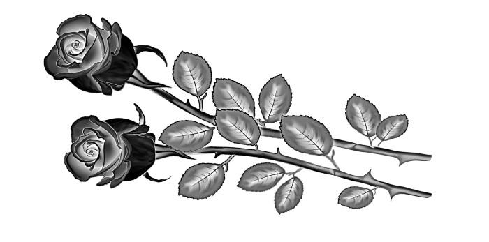Δυο λουλούδια